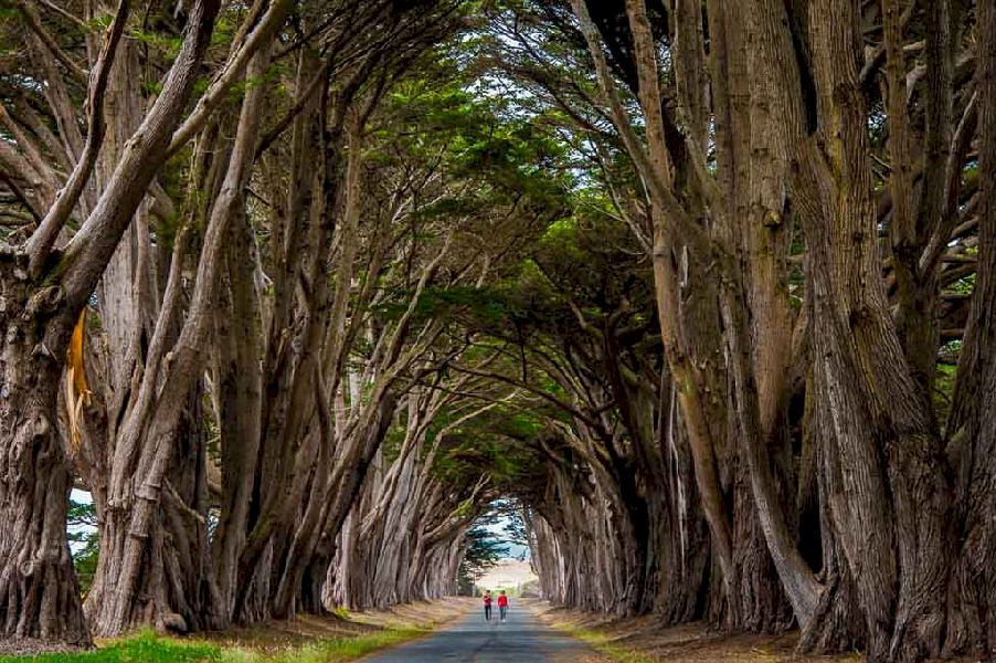 Magnificent Tree Tunnel in Point Reyes, San Francisco