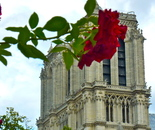 rose stuck to Notre Dame