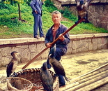 Chinese man with his fishing cormorants