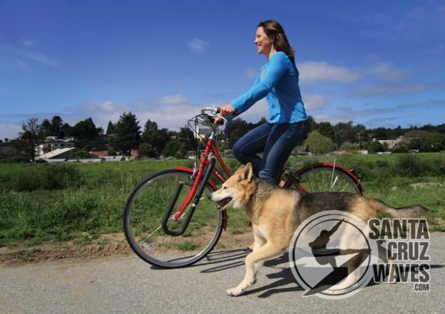 Moved By Bikes Dog Runner G4