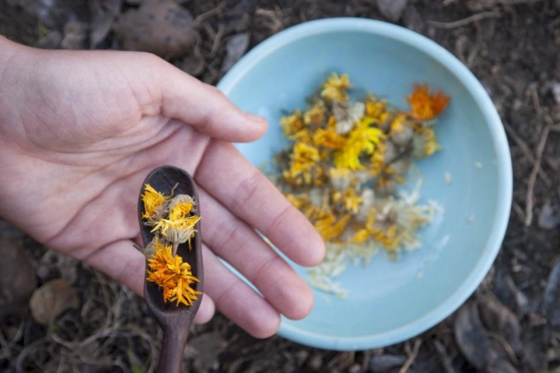 calendula flower hand