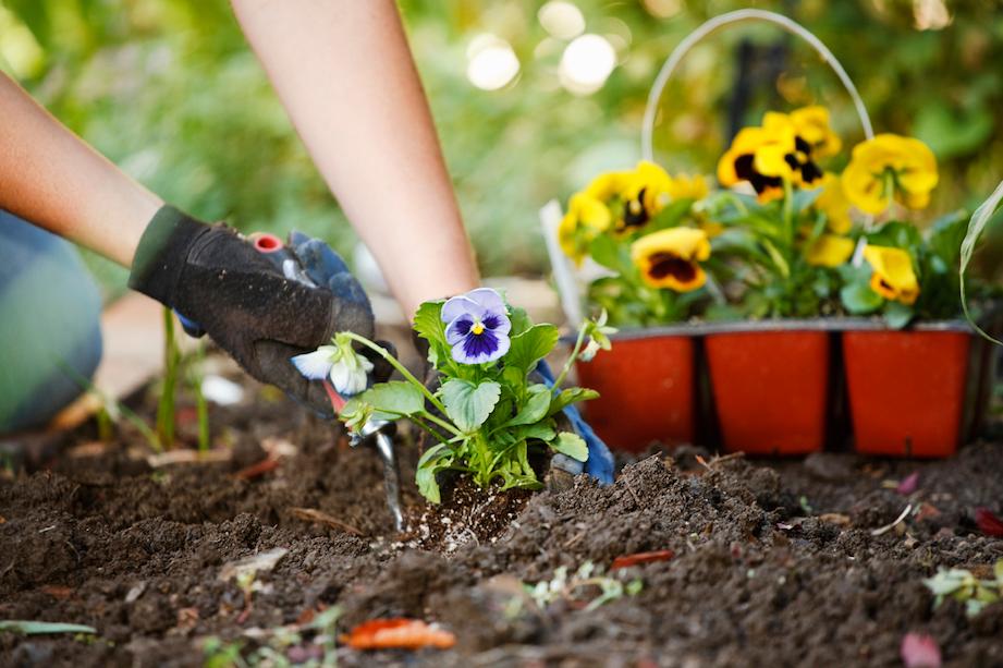Spring Gardening Tips: Planting Flowers