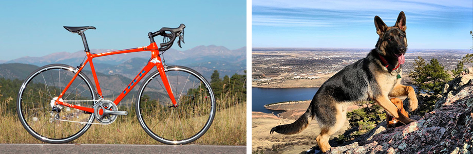 Bike Trails and Dog Hikes in Fort Collins