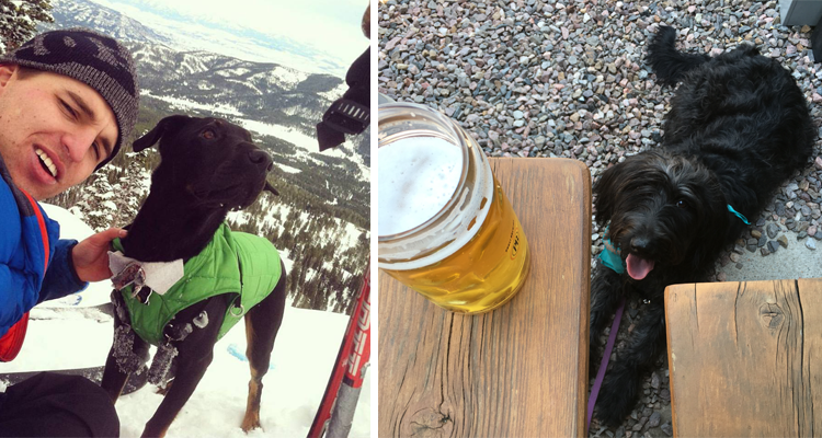 Stereotypes of Coloradans Dogs
