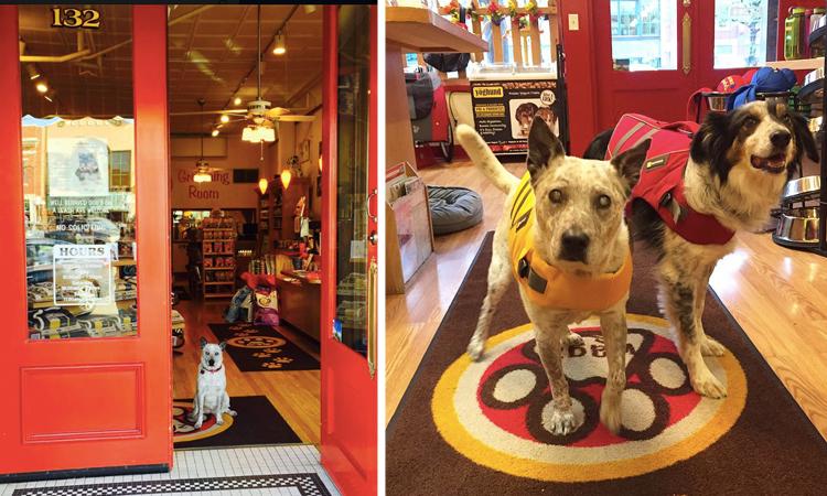 Wagz Pet Market Fort Collins Dog-Friendly