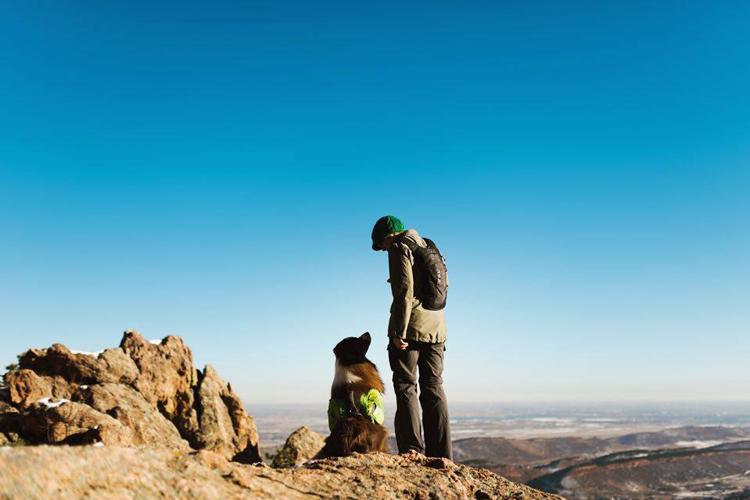 Summit Dog Training Fort Collins Colorado