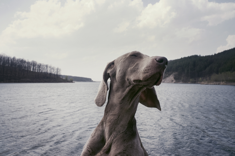 Dog-friendly hikes near Fort Collins Colorado