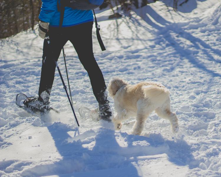 Best Snowshoeing in Fort Collins, Loveland, Estes Park, Rocky Mountain National Park