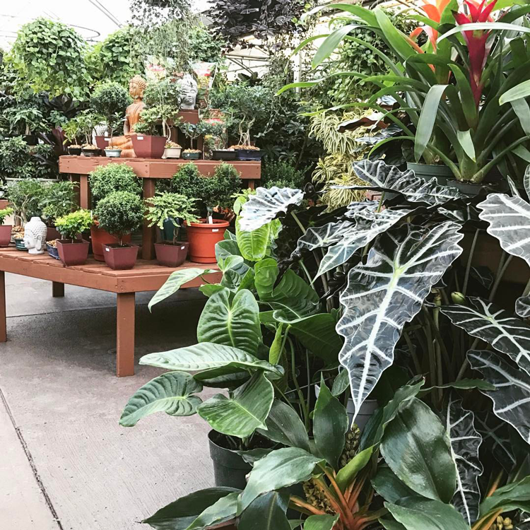 Gulley Garden Center Fort Collins Loveland Greeley Garden Centers Greenhouses Nurseries