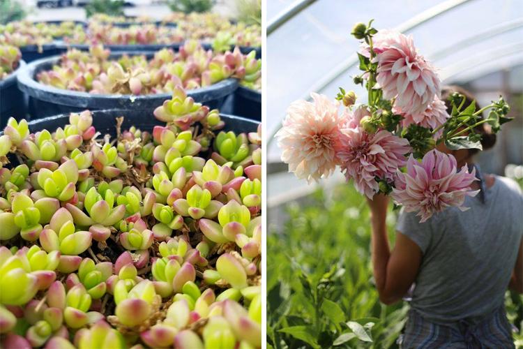 Harmony Gardens Fort Collins Loveland Greeley Garden Centers Greenhouses Nurseries
