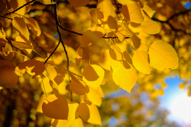fall foliage color hikes in Rocky Mountain National Park Estes Park