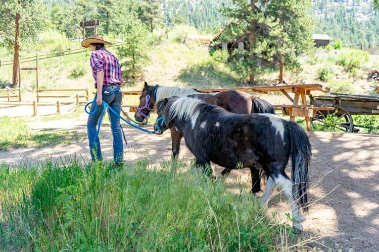 SK Horses Estes Park things to do