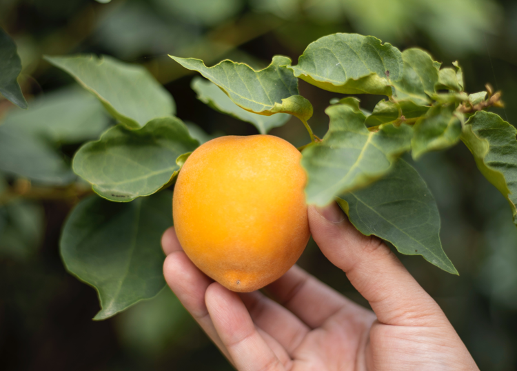 Where to Donate Produce from Backyard in Northern Colorado