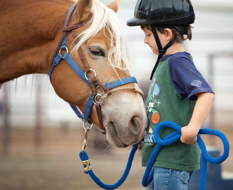 Hearts & Horses Loveland, CO