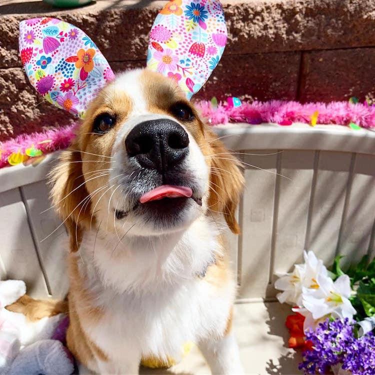 Easter Egg Hunt at the Dog Pawlour Fort Collins