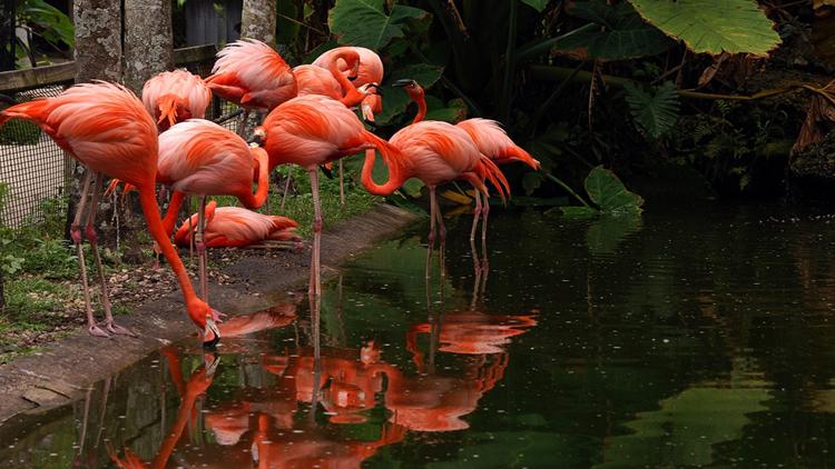 Flamingo Gardens, Davie, FL