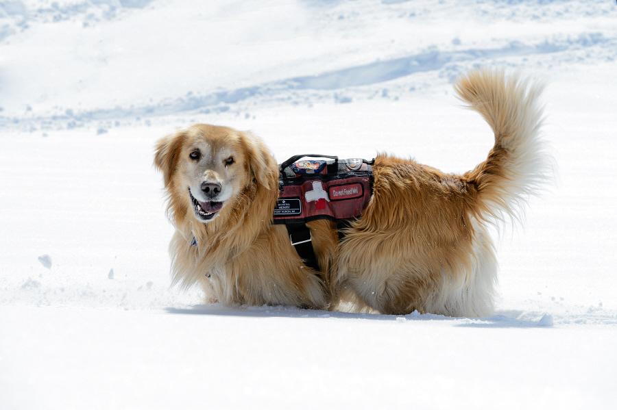In Vail, Colorado. Ski patrol.