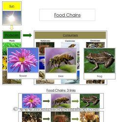 Food_web