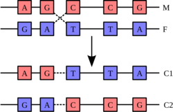 Dna-base-pairs-letter-set