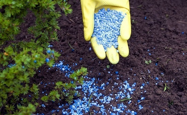 All About Fertilizers