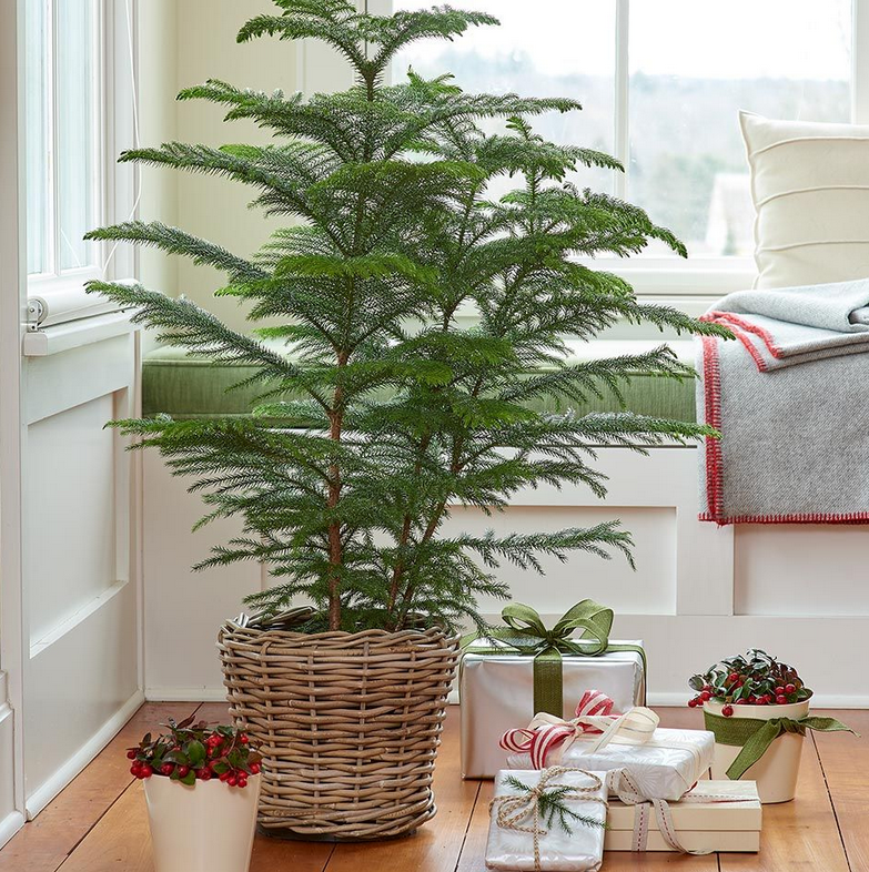 How to Care for Plants That Are Popular During the Holiday Season