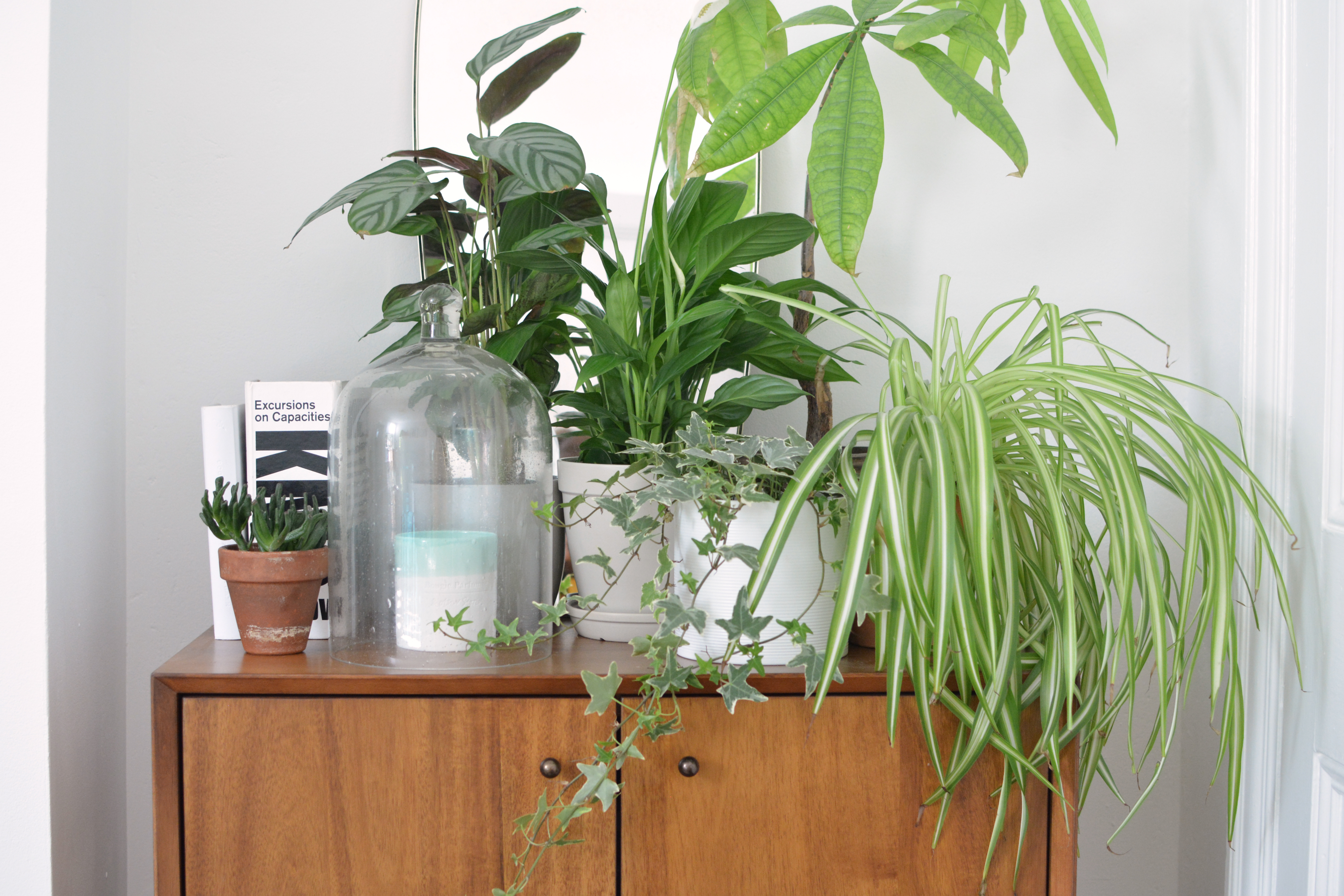How to Use Houseplants as Decorative Accents (4 Ideas to Get You Started)
