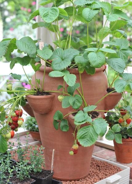 Fruits You Can Grow Indoors