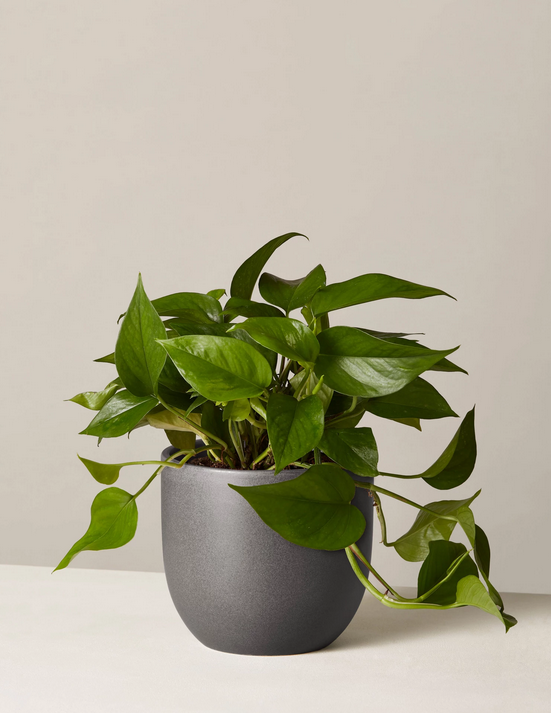 If You Want to Add Plants to Your College Dorm Room, ONLY Consider These