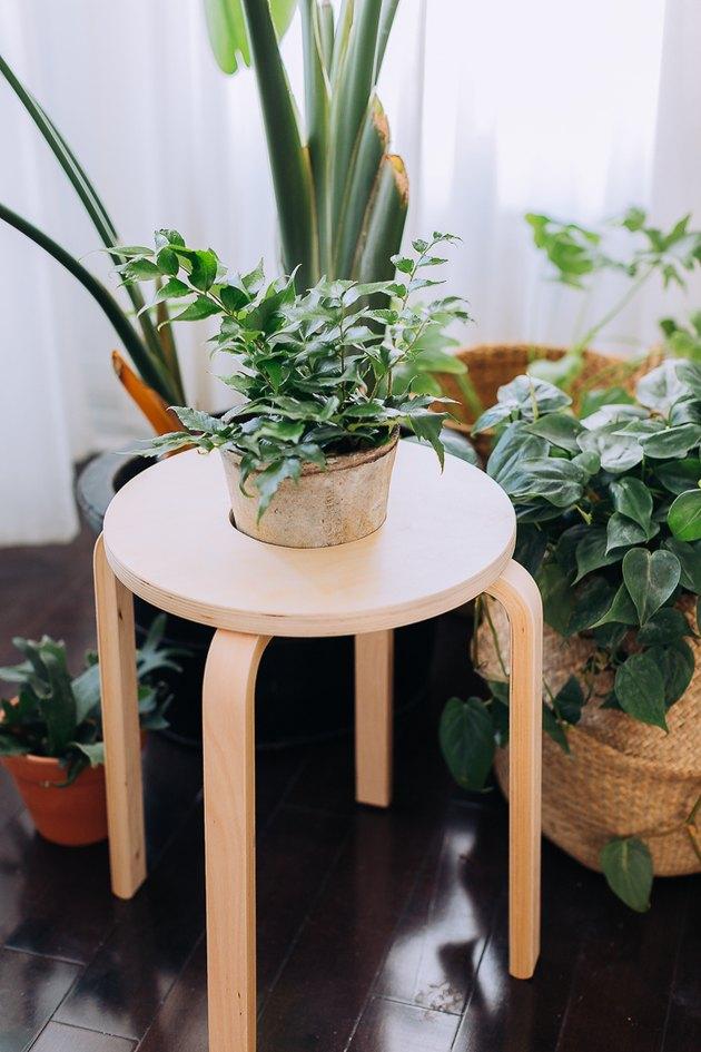 The 17 Best Plant DIYs Ever