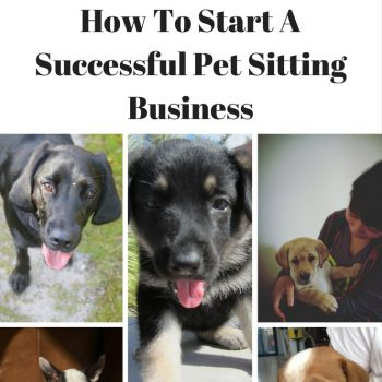 Make Money Pet Sitting!