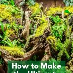 How to Make the Ultimate Terrarium