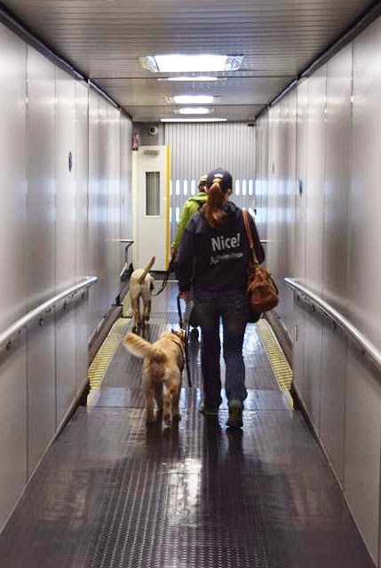 A female GDB puppy raiser walks with her guide dog puppy through the tunnel to board the plane.