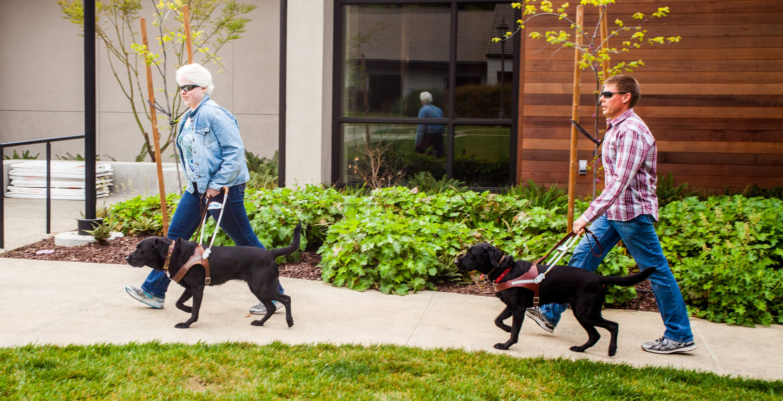 Two guide dog users (one male and one female) walk at a brisk pace along a path on the San Rafael, CA campus