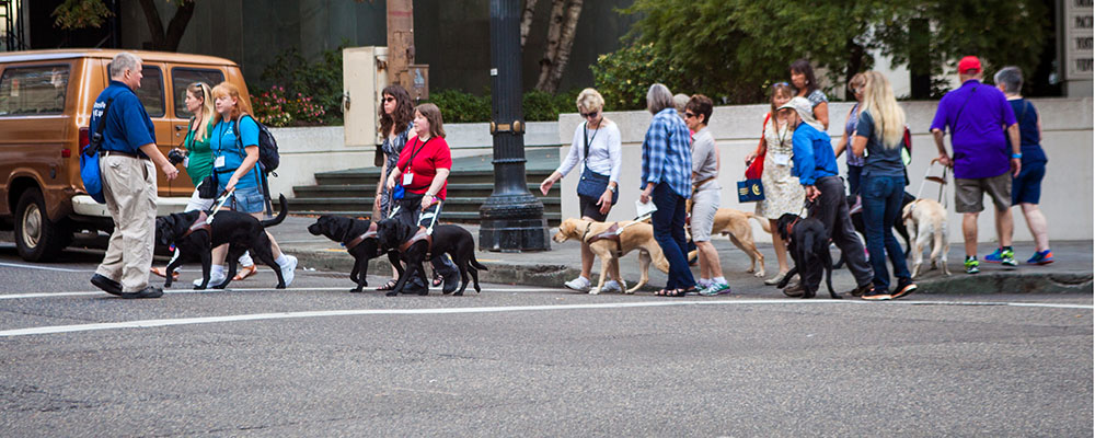 A large group of people with their guide dogs crossing a busy intersection.