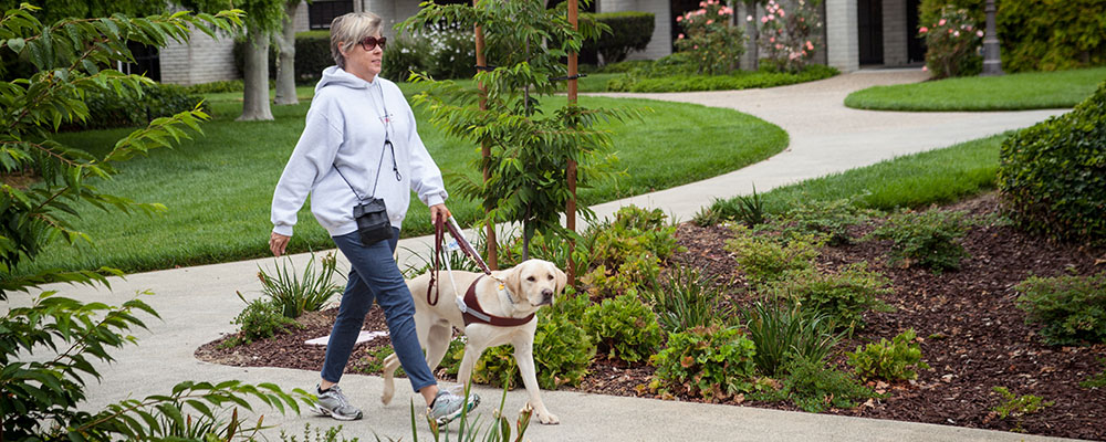 A woman walking with her yellow Lab guide dog down a winding path.