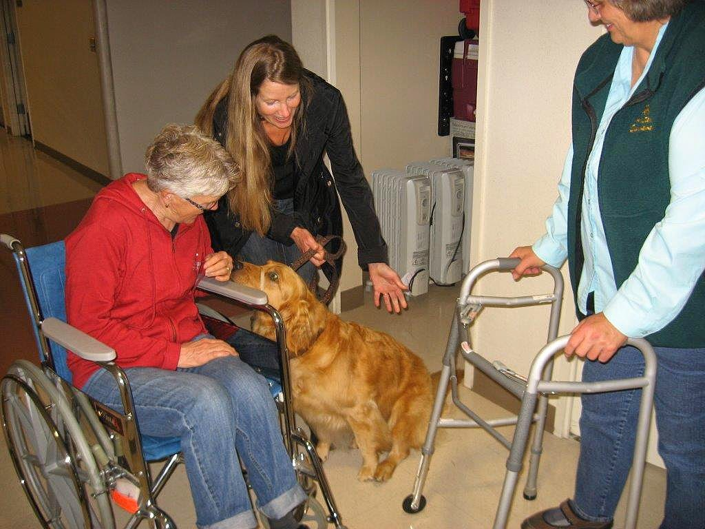 Karyn and Ceili (Golden Retriever) practice petting by a circle of strangers