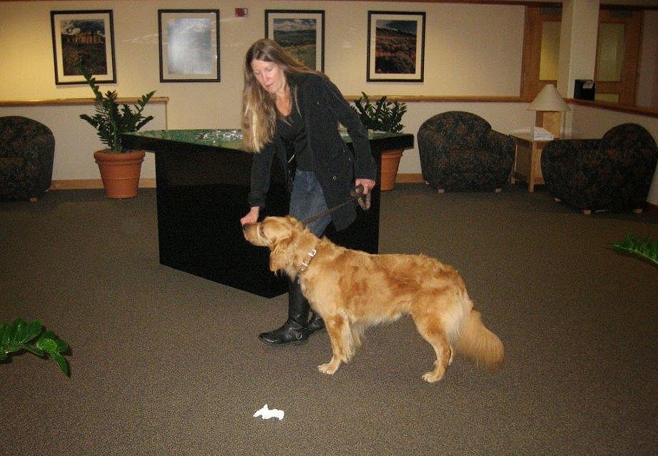 Karyn and Ceili (Golden Retriever) practice ignoring a dropped item
