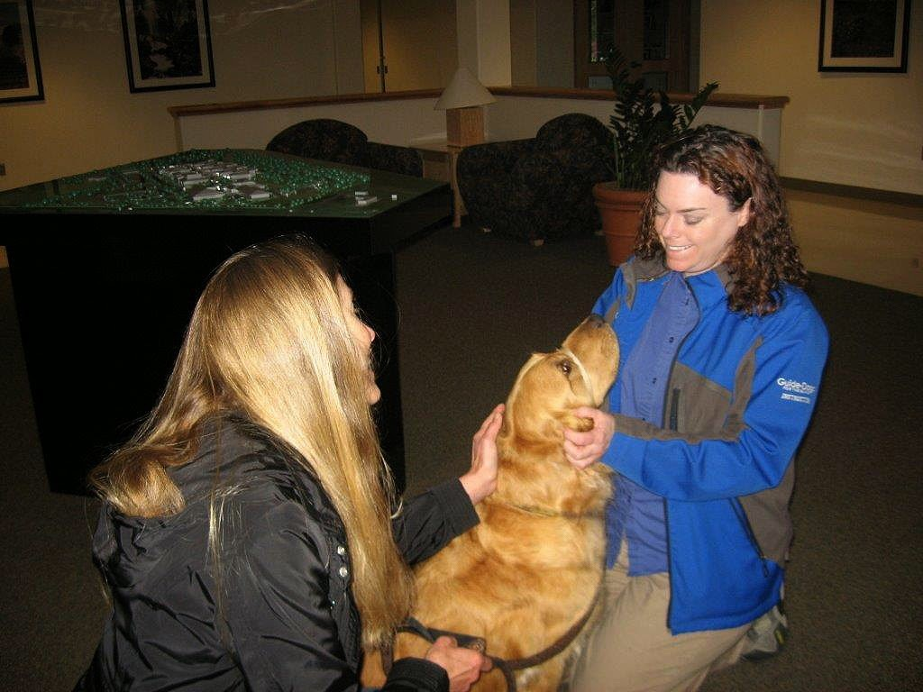 Karyn and Ceili (Golden Retriever) practice petting by a stranger
