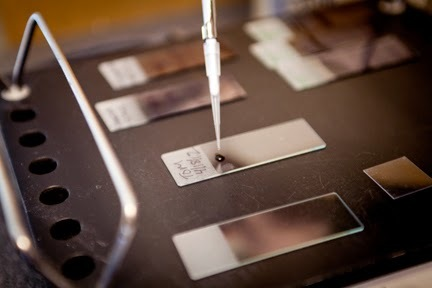 Technician pipettes (placing a drop) of dye onto a slide.