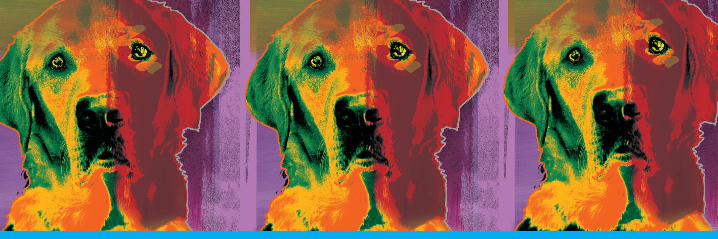 A colorful artistic rendering of a yellow Lab guide dog; the image is repeated three times.