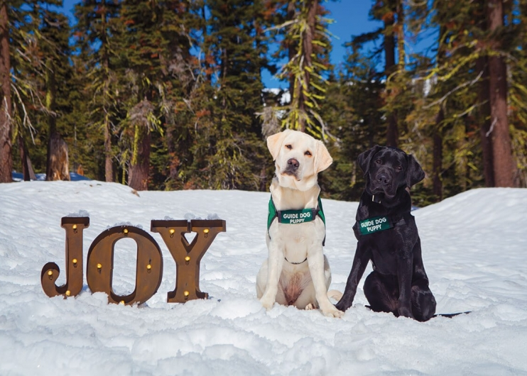 "A yellow Lab guide dog puppy and a black Lab guide dog puppy sitting in a snowy forest next to individual letters that spell out the word ""JOY."""