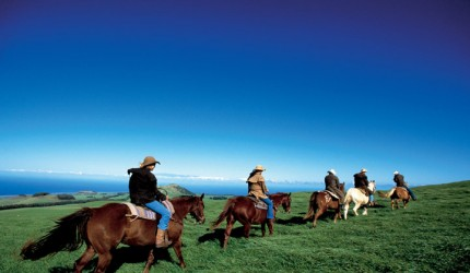 Horseback riding, Kohala | Hawaii Tourism Authority (HTA) / Kirk Lee Aeder
