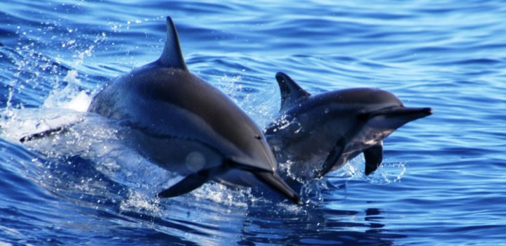 dolphinexcursions_00