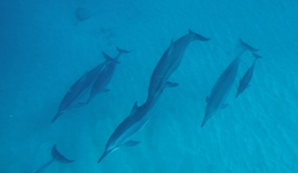 dolphins01