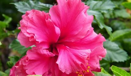 exotic flowers hawaii