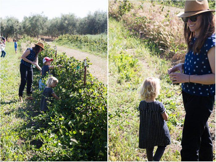 Blackberries at Yolo Press