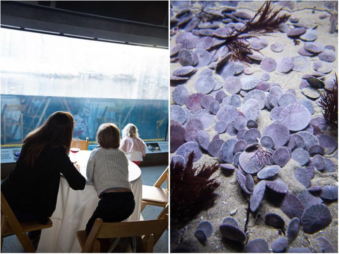 Monterey-Aquarium