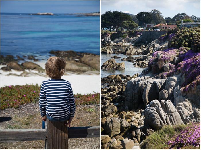 Monterey-Ice-Plant