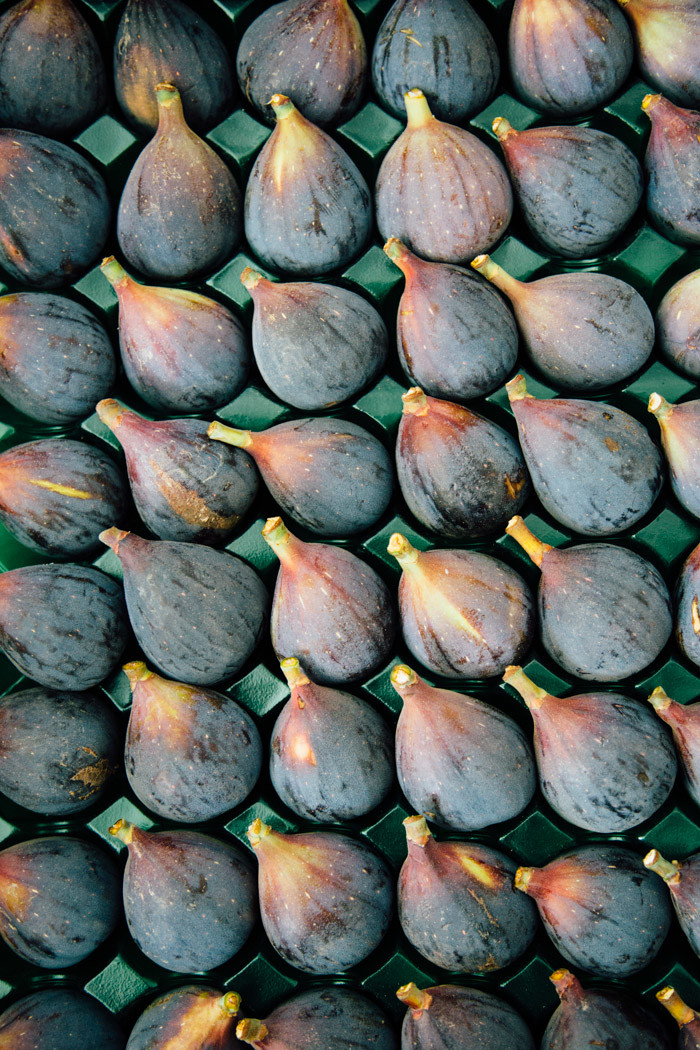 Figs-Hither-and-Thither-2