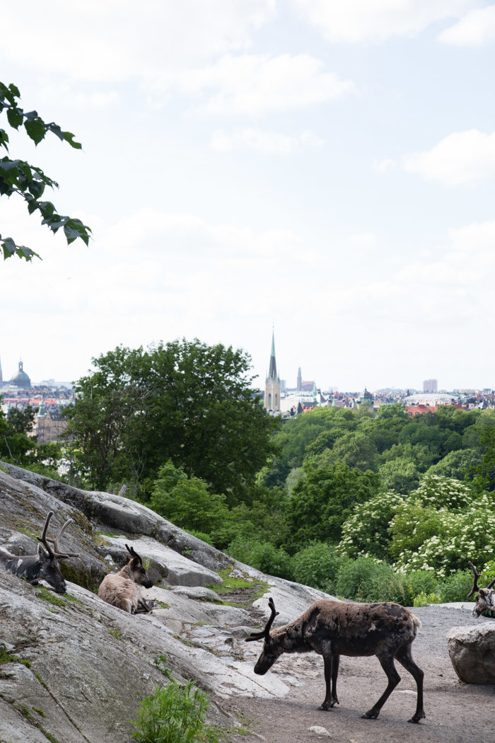 Stockholm-travel-guide-Hither-and-Thither-50